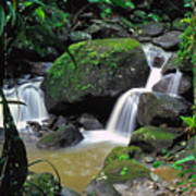 El Yunque National Forest Waterfall Art Print by Thomas R Fletcher