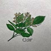Elder Art Print