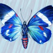 Electric Blue Moth Art Print