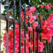 Elegant Fence Art Print
