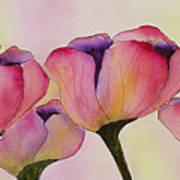 Elegant Tulips  Art Print