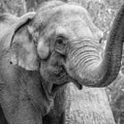 Elephant And Tree Trunk Black And White Art Print