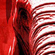Elephant Animal Decorative Red Wall Poster 14 - By  Diana Van Art Print
