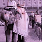 Elephant At Amber Fort Art Print
