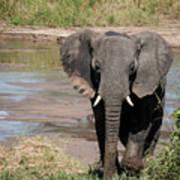 Elephant At The River Art Print