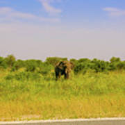 Elephant At The Road Art Print
