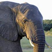 Elephant Close Up Art Print
