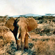 Elephant Eyes Art Print