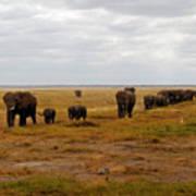 Elephant Herd Art Print