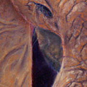 Elephant Macro Art Print