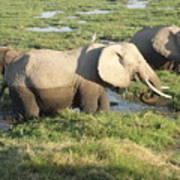 Elephant Mother And Calves Art Print