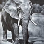 Elephant Night Walker Art Print