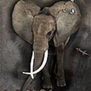 Elephant No 04 Art Print