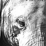Elephant Portret Art Print