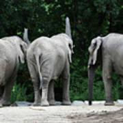 Elephant Trio Art Print