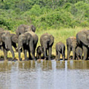 Elephants At The Waterhole   Art Print
