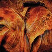 Elephant's Ear Art Print