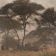 Elephants On The Serengeti Foggy Evening Art Print