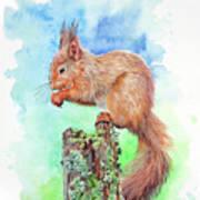 Elevenses - Red Squirrel Art Print