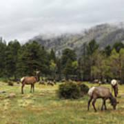 Elk Herd Art Print