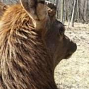 Elk Profile Art Print