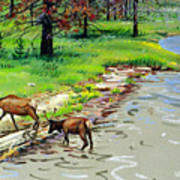 Elks Crossing Art Print