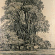 Elm Trees In Old Hall Park Art Print by John Constable