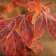 Embers Of Autumn Art Print