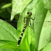 Emerald Dragonfly Art Print