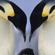 Emperor Penguin Family Art Print