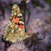 En Garde - Painted Lady - Butterfly Art Print