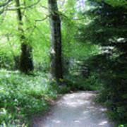 Enchanted Forest At Blarney Castle Ireland Art Print