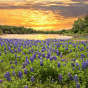 End Of A Bluebonnet Day Art Print