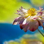 End Of Summer Lotus Art Print