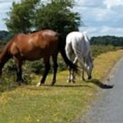 England - Wild Horses Art Print