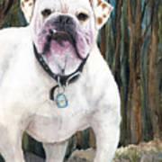 English Bulldog Art Print