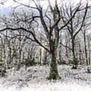 English Forest Snow Art Art Print