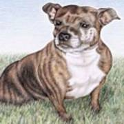 English Staffordshire Terrier Art Print