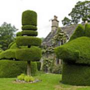 English Yew Topiary Art Print