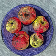 Engraved Wormy Apples Art Print