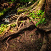 Entwined Roots Art Print