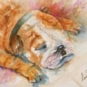 Enzo Art Print