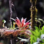 Epiphytic Plants Art Print