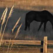Equine Evening N. California Art Print