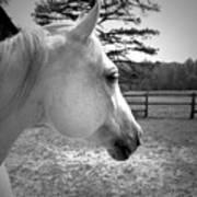 Equine Profile Art Print