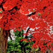 Essence Of Japanese Maple Tree Art Print