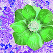 Ethereal Purple Poppy Too Art Print