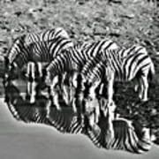 Etosha Pan Reflections Art Print