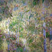 Eucalyptus 012 Art Print
