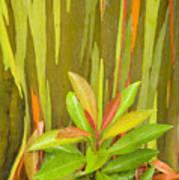 Eucalyptus And Leaves Art Print